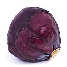 Rotkohl / Blaukraut Kopf